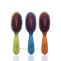 Cartel Brosse cheveux pneumatique Sanglier /1 à VERNON